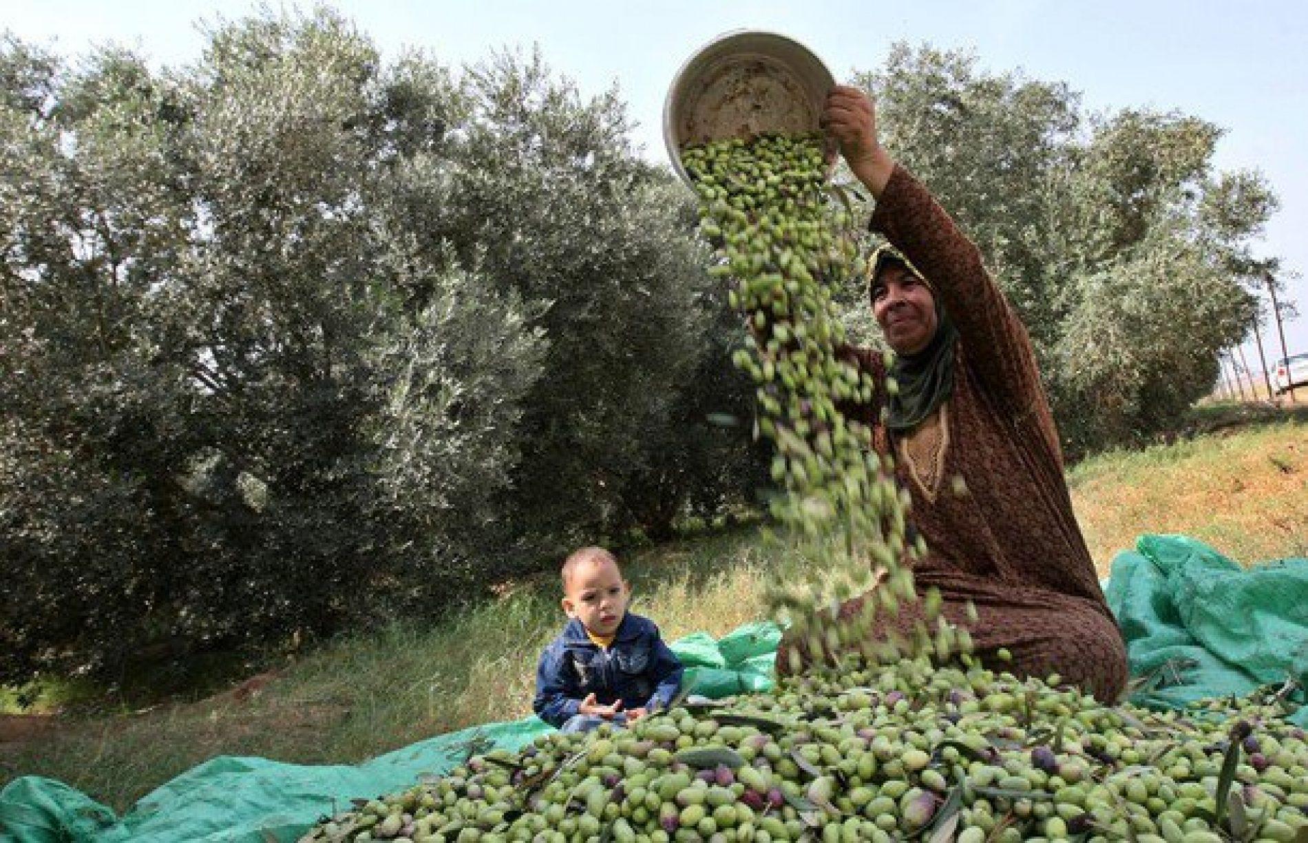 Uawc, Campagne de récolte 2012